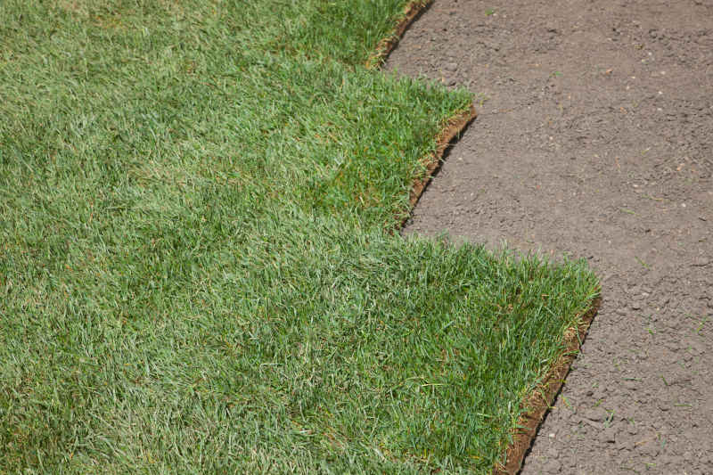 beautiful and high quality sod