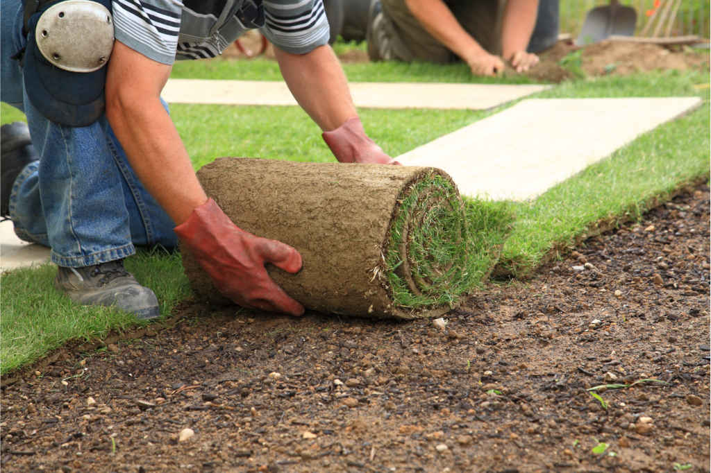 professional lawn care worked laying sod in a garden